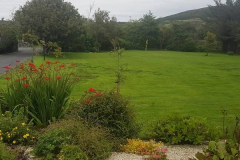 greenhand-lawn-treatment-A-few-weeks-after-a-Greenhand-restorative-treatment-015