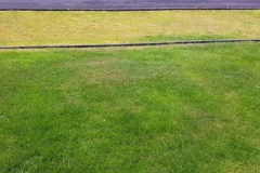 greenhand-lawn-treatment-Greenhand-v-Untreated-008