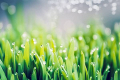 Fresh green grass with dew drops and bokeh lighting, outdoor nature background