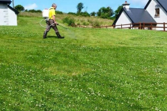 greenhand-lawn-treatment-Spraying-for-weeds-003